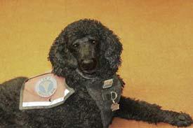 Wiggy's Dog Cookie