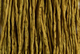 "Mustard Yellow Hand Stitched Silk Cord 42"" (SK36)"