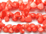 Peach Orange Bamboo Coral Beads 12-18 mm (CO564)