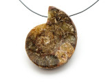 Ammonite Pendant 37mm (AM541)