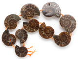 Ammonite Pendants 27-37mm - Set of 10 (AM604)