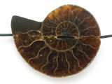 Ammonite Pendant 38mm (AM616)