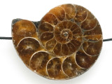 Ammonite Pendant 38mm (AM629)