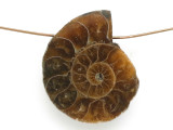 Ammonite Pendant 27mm (AM631)