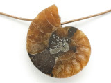 Ammonite Pendant 20mm (AM658)