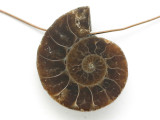 Ammonite Pendant 30mm (AM659)