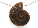 Ammonite Pendant 27mm (AM663)