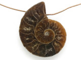 Ammonite Pendant 29mm (AM665)