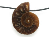 Ammonite Pendant 28mm (AM670)