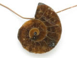 Ammonite Pendant 23mm (AM672)