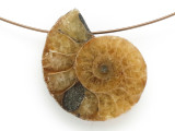 Ammonite Pendant 28mm (AM678)