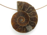Ammonite Pendant 29mm (AM682)