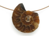 Ammonite Pendant 23mm (AM683)