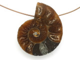 Ammonite Pendant 28mm (AM685)