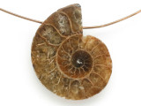 Ammonite Pendant 27mm (AM687)