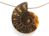 Ammonite Pendant 28mm (AM688)