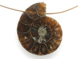 Ammonite Pendant 28mm (AM689)