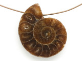 Ammonite Pendant 26mm (AM690)