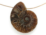 Ammonite Pendant 29mm (AM691)