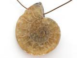 Ammonite Pendant 28mm (AM726)