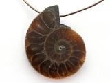 Ammonite Pendant 27mm (AM729)
