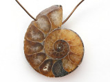 Ammonite Pendant 26mm (AM731)