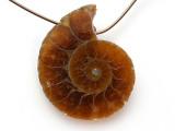 Ammonite Pendant 25mm (AM732)
