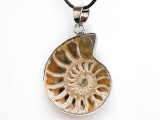 Ammonite Pendant 28mm (AM736)