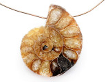Ammonite Pendant 32mm (AM802)