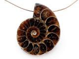Ammonite Pendant 34mm (AM806)