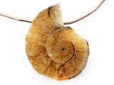 Ammonite Pendant 20mm (AM816)