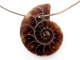 Ammonite Pendant 21mm (AM820)