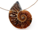Ammonite Pendant 27mm (AM823)