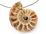 Ammonite Pendant 25mm (AM824)