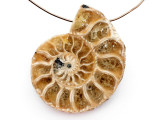 Ammonite Pendant 32mm (AM825)