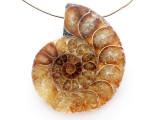 Ammonite Pendant 41mm (AM826)