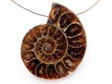 Ammonite Pendant 35mm (AM829)