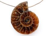 Ammonite Pendant 28mm (AM832)