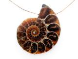 Ammonite Pendant 39mm (AM875)