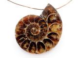 Ammonite Pendant 32mm (AM877)