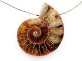 Ammonite Pendant 30mm (AM880)