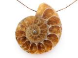 Ammonite Pendant 33mm (AM882)