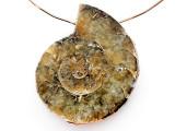 Ammonite Pendant 34mm (AM884)