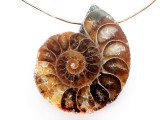 Ammonite Pendant 34mm (AM885)