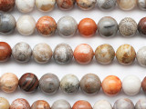 Fossil Coral Agate Round Gemstone Beads 8mm (GS5285)