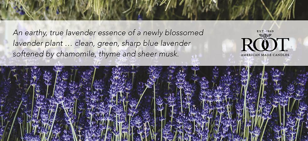 english-lavender.jpg