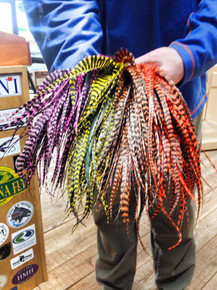 Whiting Farms Big Fly Strung Schlappen
