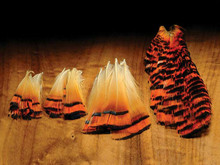 Hareline Golden Pheasant Tippets- Natural