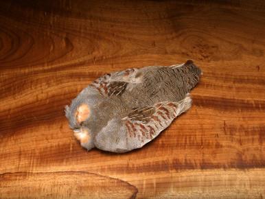 Hungarian Partridge Skins- Grade 1