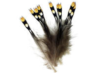Jungle Cock Nails